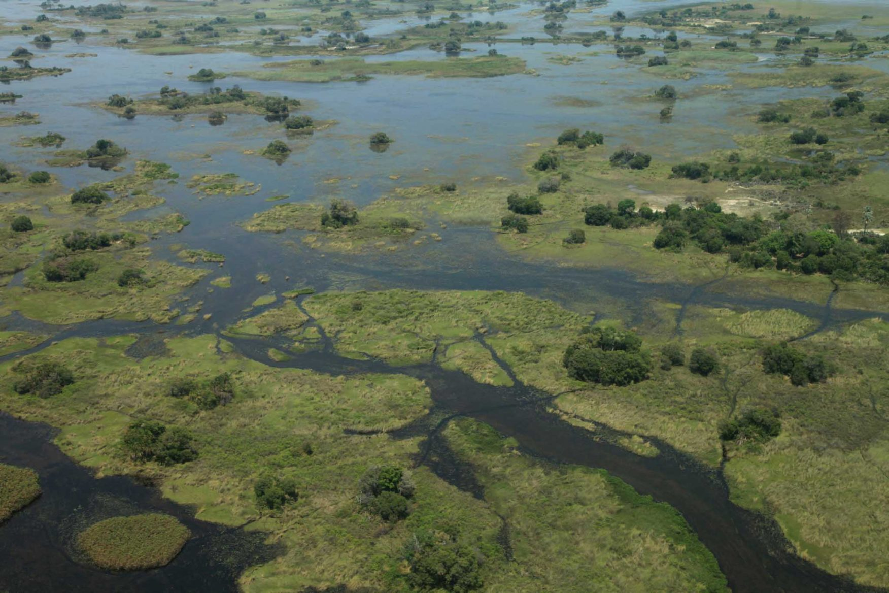 african-family-safari-okavango-delta-wetlands