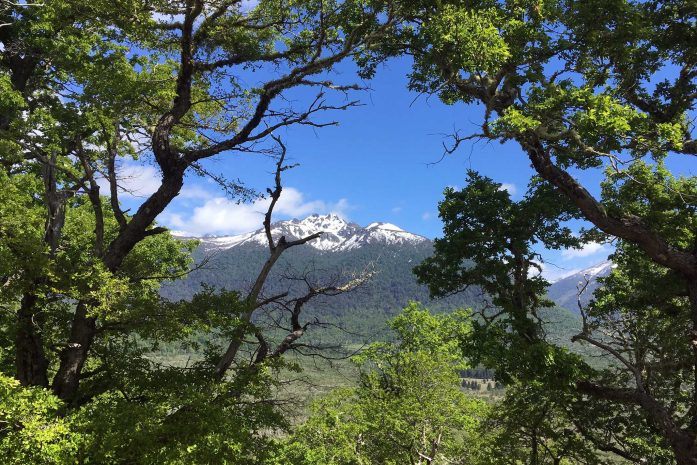 View through the trees toward snow-capped mountains