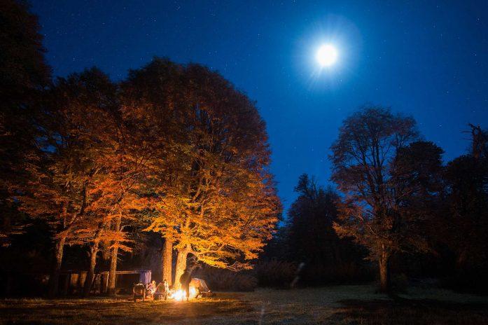 Wilderness at night