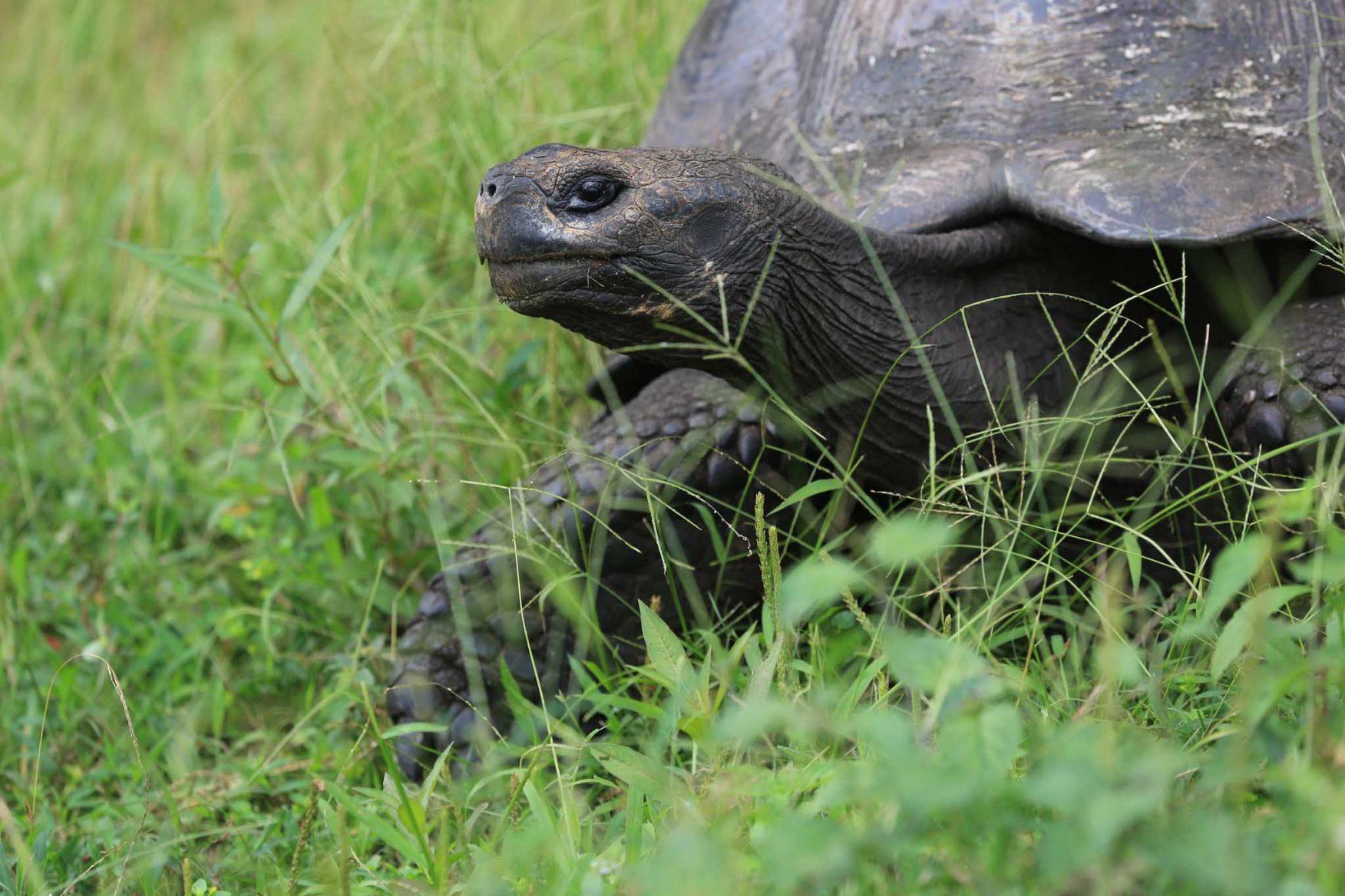 galapagos-adventure-tortoise