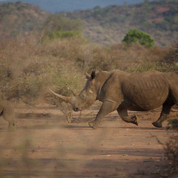 Conservation Focus