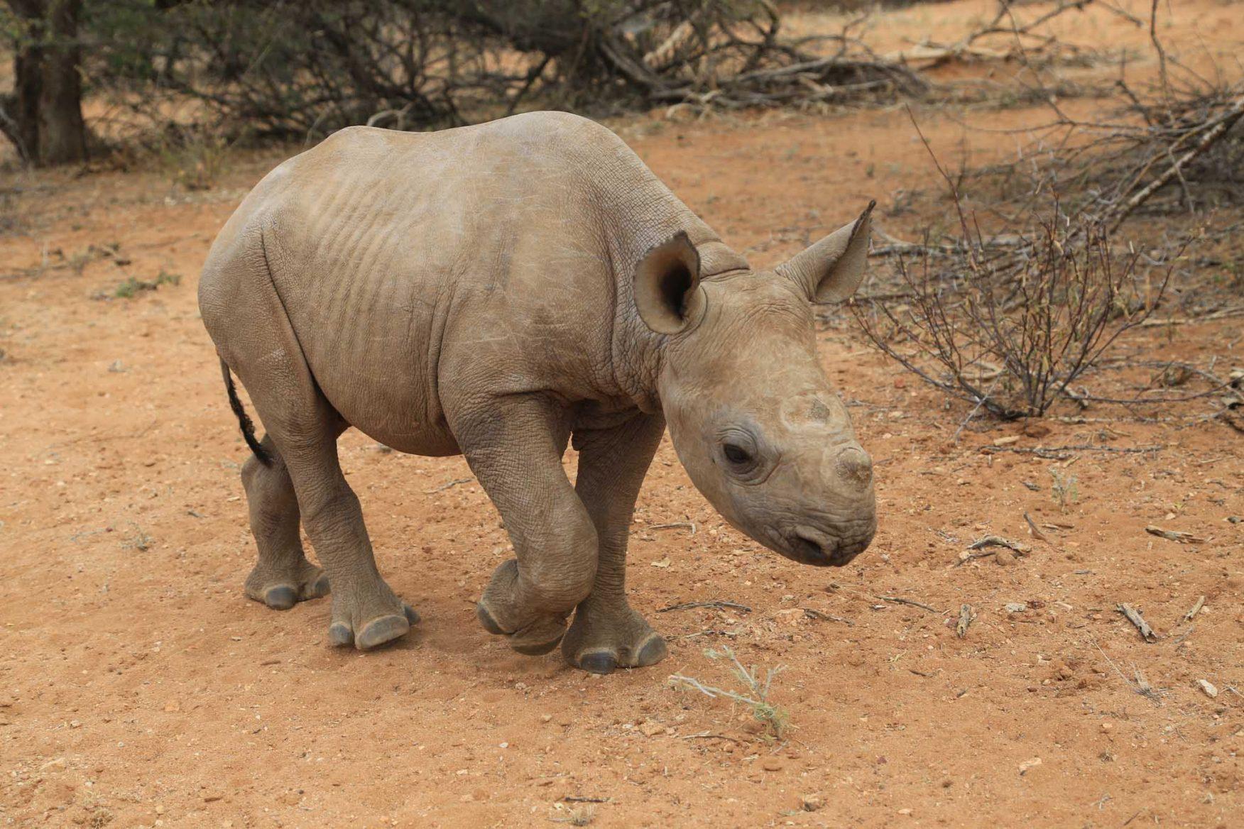 rhino-conservation-11-baby-rhino