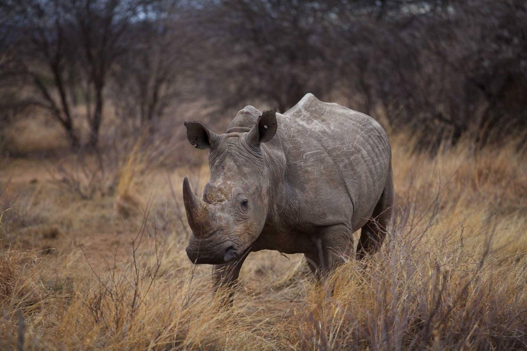 rhino-conservation-4-rhino