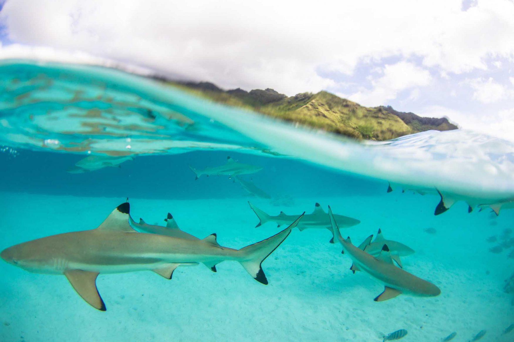 the-brando-boats-australasia-honeymoon-tahiti-sharks